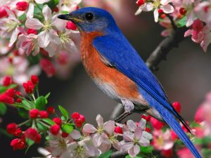 BRIGHT-PINK-FLOWERS-TREE-WITH-BLUE-BIRD