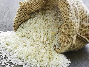 beras-bebas-kutu