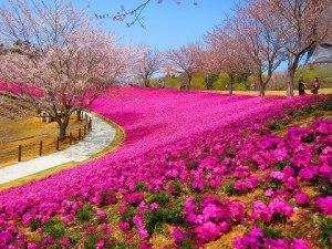 bunga ungu2