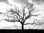 dahan pohon