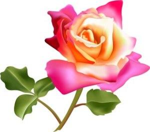 bunga mawarku4