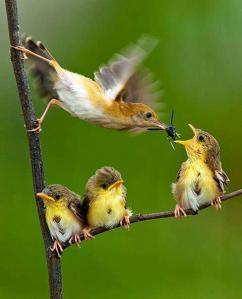 burung mencari nafkah