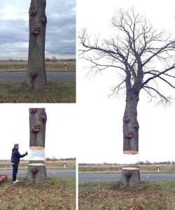 pohon ngambang