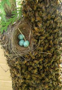 telur dan lebah